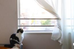 夏と冬を乗り越えるなら窓リフォーム!|窓リフォーム